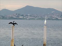 Black white birds 300475023_26df4e053a_m