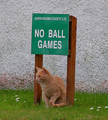 No ball games 502077255_9e57b061bb_m