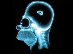 Homer-simpson-wallpaper-brain-1024-full-756814
