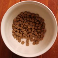 Dog_food_48331634_71df91501e