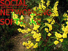 Social_networking_flickr_64955397_2