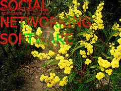 Social_networking_flickr_64955397_2