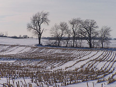 Wisconsin_snow_2110974734_2fb79d2ba
